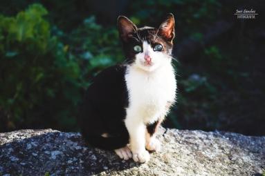 Un lindo gatito