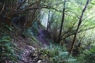 Bosque al final de la ruta