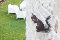 Ardilla en la pared