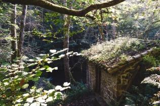 Molino camuflado en el bosque