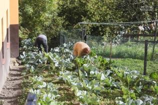 Cultivando en el huerto de casa