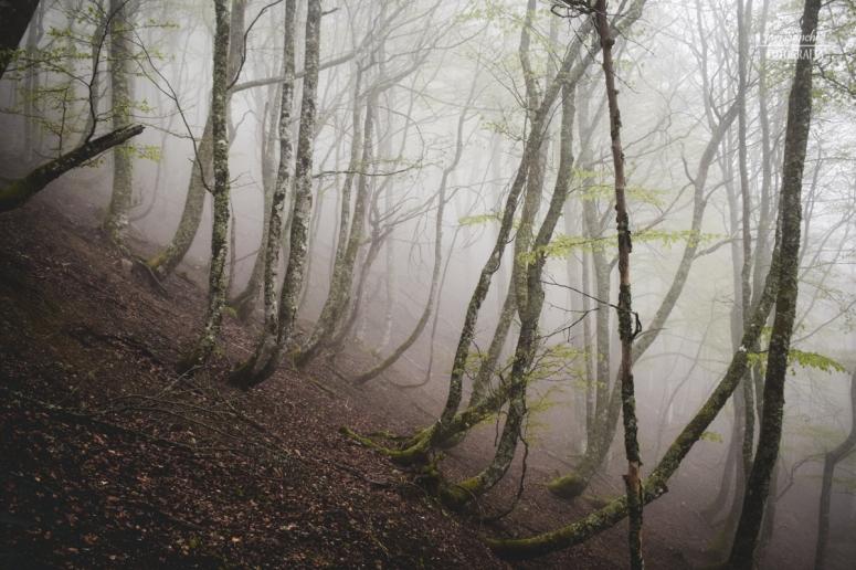El bosque sombrío